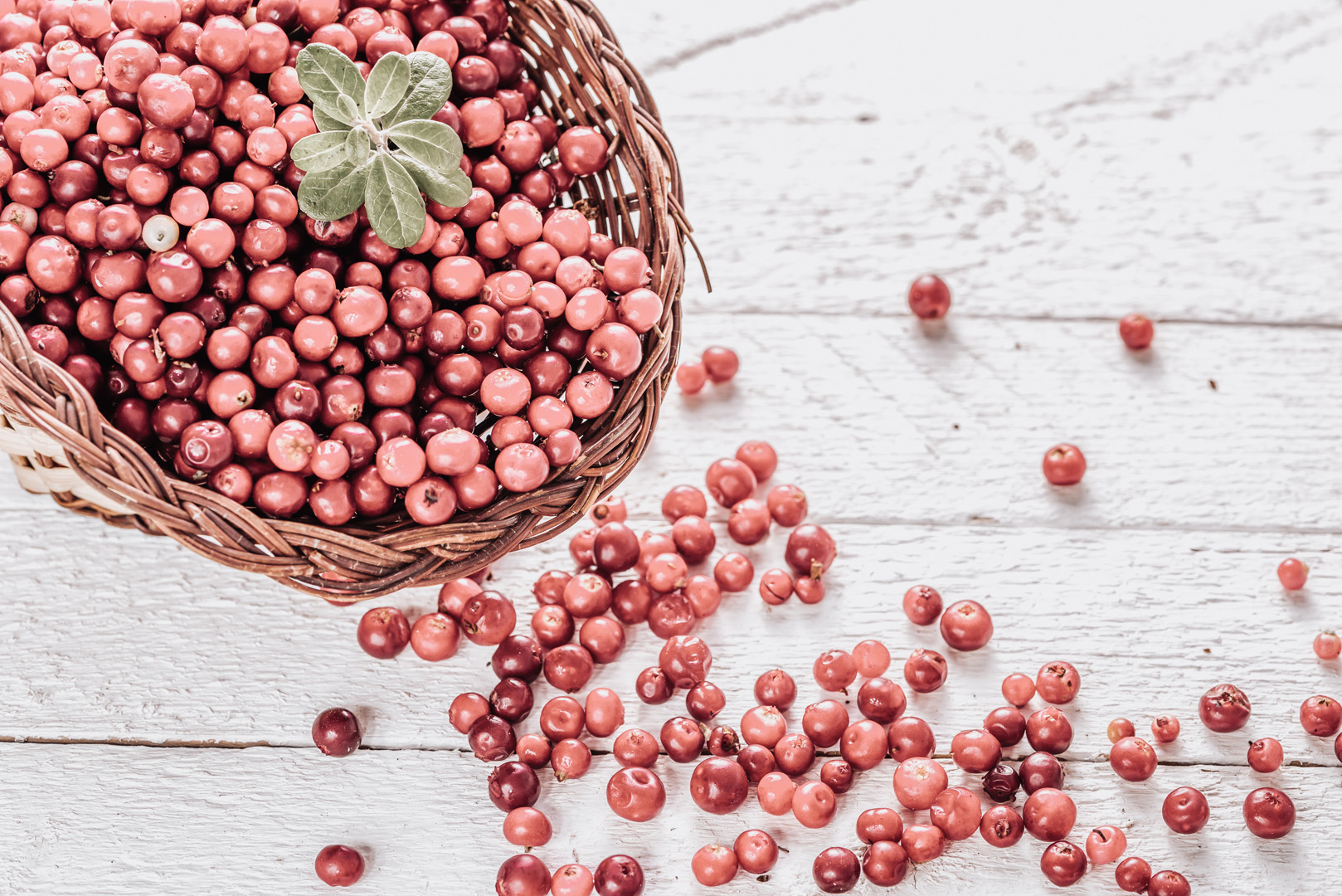 Cranberry-Extrakt (CystiCran®)