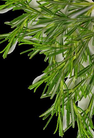 media/image/leafes2.png