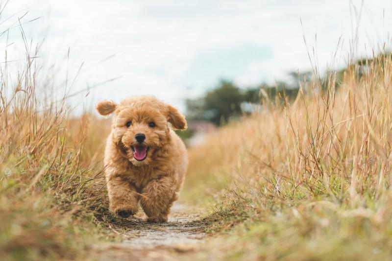 media/image/puppy-chasing_t20_W71jBX.jpg