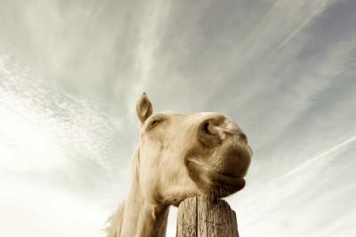 Pferd-Himmel-EquiMovemIwP0P83Z5h6o